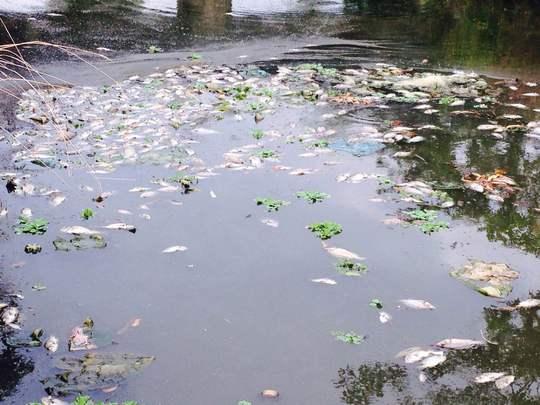 Nguồn nước ô nhiễm được cho là nguyên nhân dẫn đến hiện tượng cá chết Ảnh: CTV
