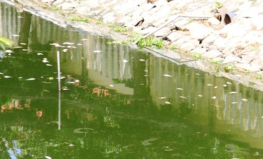Hình ảnh ghi ngày 14-7, tại hồ Nguyễn Du vẫn còn nhiều xác cá