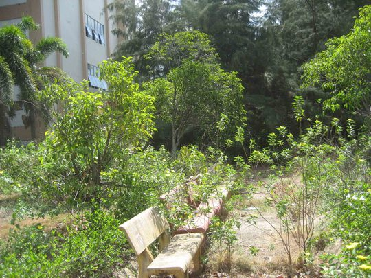 Phía sau bệnh viện, cỏ dại mọc bao trùm lên dải ghế dành cho người nhà của bệnh nhân nghỉ ngơi