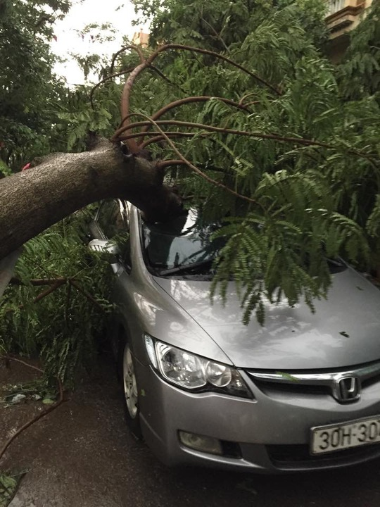 Cành cây đè bẹp đầu ô tô