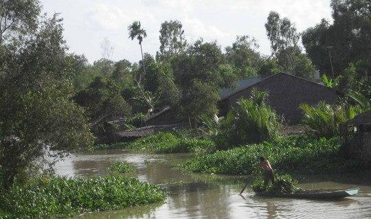 Lục bình bủa vây kênh rạch miền Tây