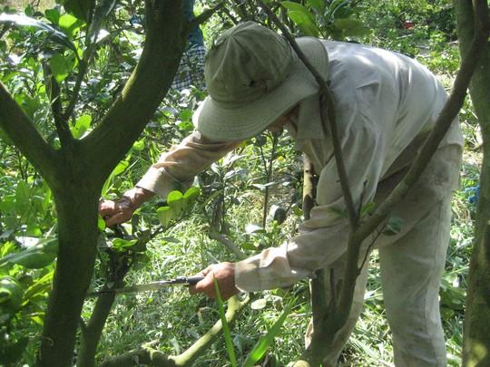 """Nhà vườn tất bật chuẩn bị trái """"độc"""" mùa Tết"""