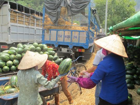 Nhiều xe dưa đã bị phía Trung Quốc trả về vì không đạt chất lượng, được chủ hàng mang về bán đổ bán tháo với giá rẻ chỉ từ 10-20 ngàn đồng/quả ở ngay cửa khẩu Tân Thanh.