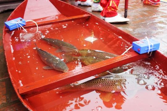 Cá chép dùng để tế là những con cá to, khỏe mạnh