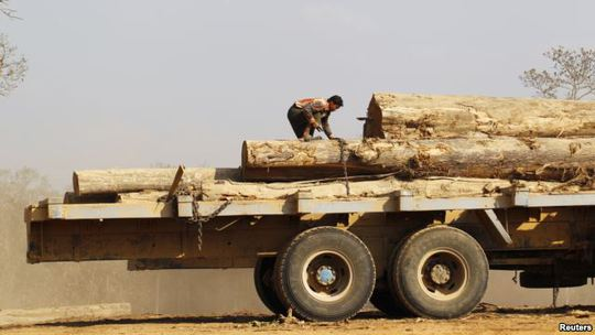 FILE - Man secures teak logs to vehicle in a logging camp at Pinlebu township, Sagaing, northern Myanmar, March 5, 2014.
