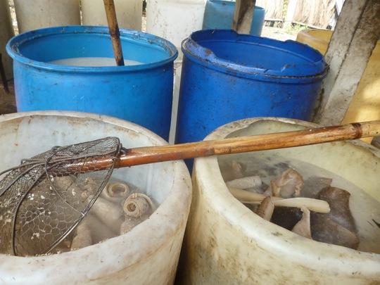 Dụng cụ đựng da heo tại cơ sở Đăng Khoa quá mất vệ sinh.