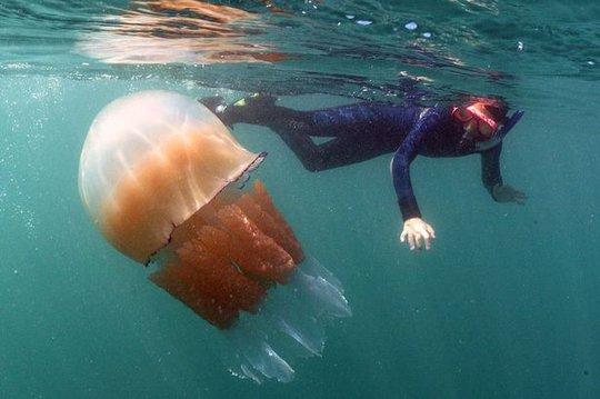 Sứa chỉ có thể gây dị ứng nhẹ nên nhiếp ảnh gia và cháu trai có thể bơi lội thoải mái