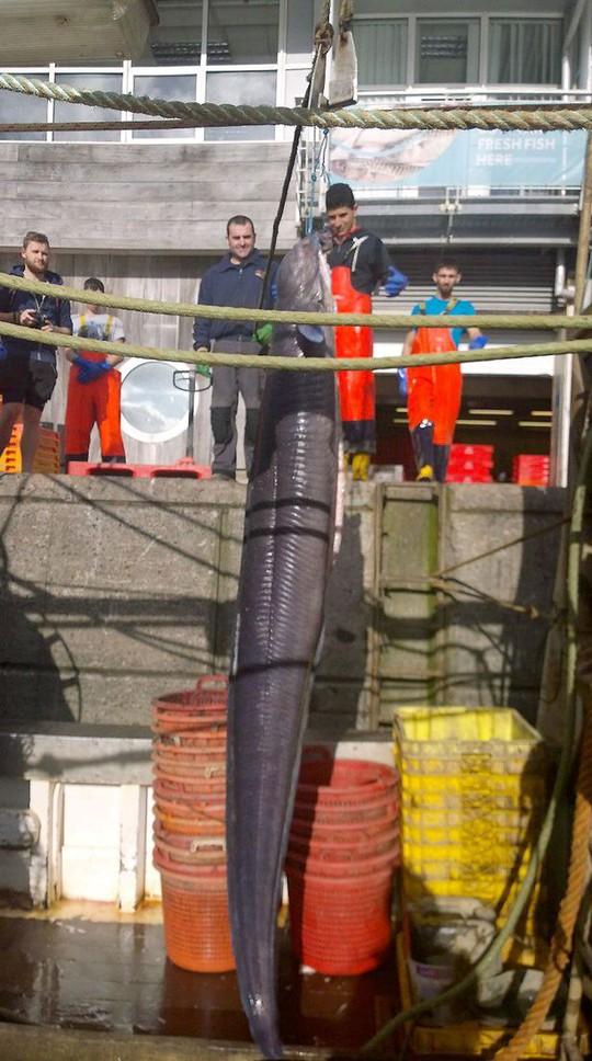 Con lươn dài hơn 6 m