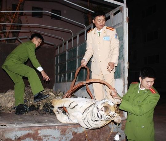 Con hổ nặng 120 kg vận chuyển trái phép cuối năm 2014 bị lực lượng chức năng bắt giữ
