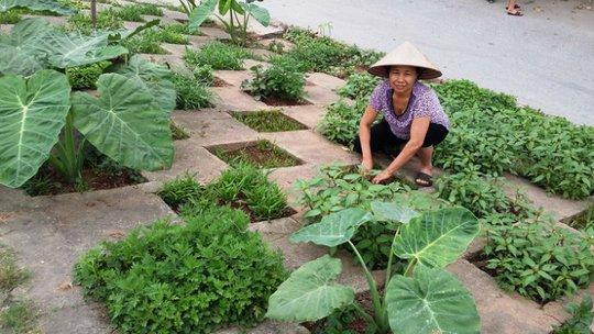 Một người dân Hà Nội tận dụng đất để trồng rau sạch trên vỉa hè - Ảnh: Q.Thế