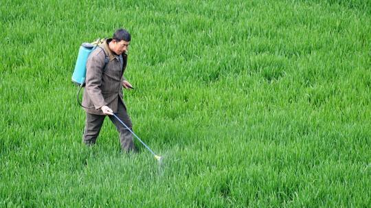Nông dân ở tỉnh An Huy, Trung Quốc, phun thuốc bảo vệ cây trồng Ảnh: Franceinfotv