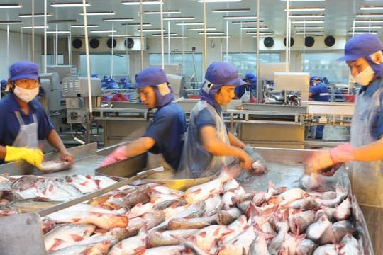 Ngành thủy sản có triển vọng xuất khẩu nhiều hơn vào châu Âu. Trong ảnh: Chế biến cá tra xuất khẩu ở ĐBSCLẢnh: THỐT NỐT