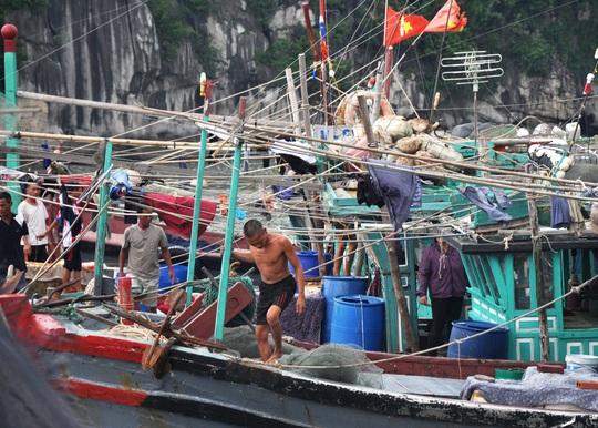 Ngư dân tỉnh Quảng Ninh neo đậu tàu thuyền tránh bão số 1Ảnh: TRỌNG ĐỨC