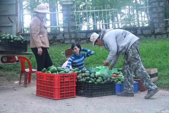 Một điểm thu mua bơ tại Đà Lạt