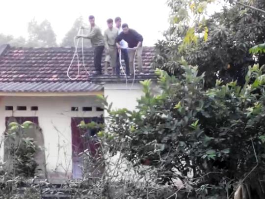 Người dân đứng trên mái nhà thả giây thòng lòng bắt con trâu điên