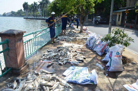 Công nhân vớt cá chết lên trên bờ hồ Tây