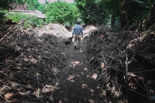Lối vào nhà phủ đầy cây cối do nước lũ kéo về