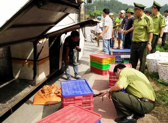 Hơn 1,3 tấn rắn được Lực lượng Kiểm Lâm Thanh Hóa phát hiện trên xe khách từ Cần Thơ ra Quảng Ninh tiêu thụ