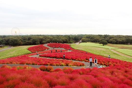 Công viên được quy hoạch để trồng nhiều giống hoa với những màu sắc khác nhau