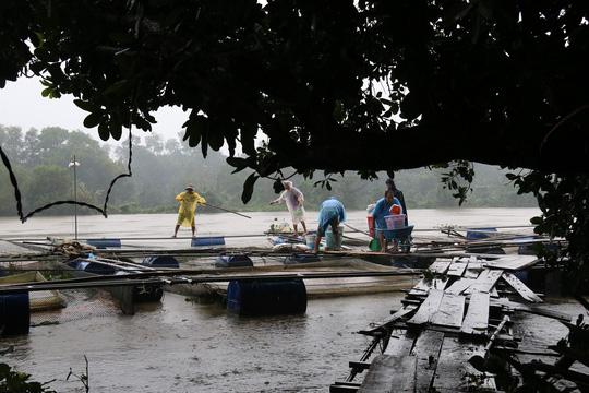 Gia đình ông Lịch đội mưa vớt cá bán cho thương lái