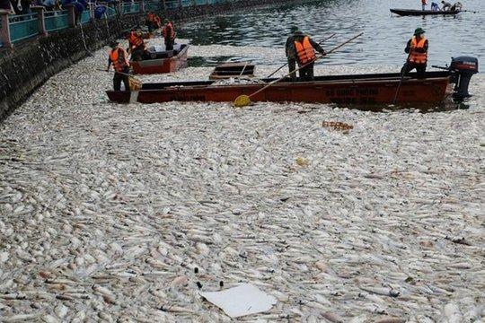Khoảng đầu tháng 10, hơn 200 tấn cá bị chết hàng loạt ở Hồ Tây và được thu gom xử lý