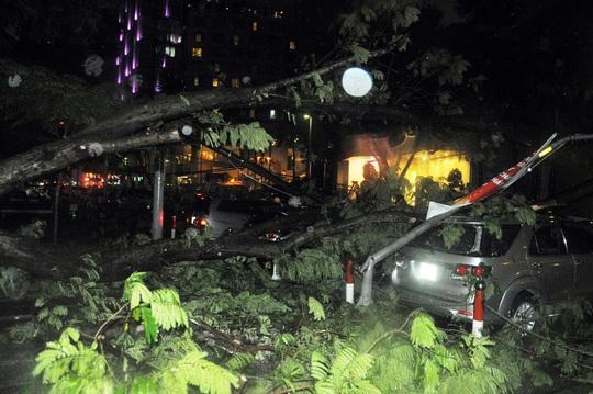 Hiện trường sự cố cây xanh bật gốc đè 7 ô tô ở trung tâm Sài Gòn