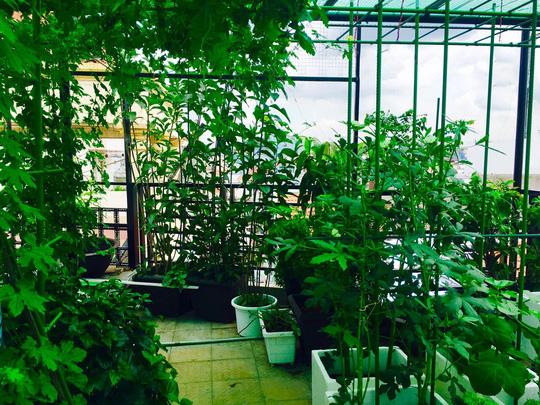 Vườn rau trên mái nhà của nhà thiết kế áo dài Thuận Việt