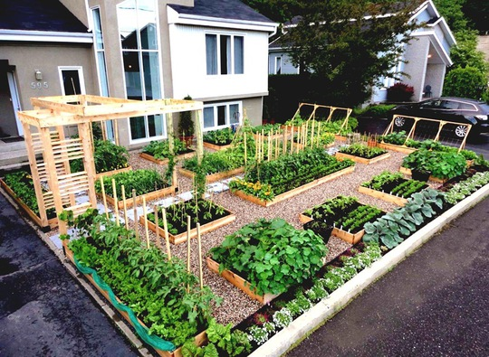 Khoảng vườn gọn xinh từ khung gỗ đặt ngay ngắn phía trước nhà.