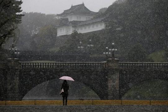 Tuyết rơi ở thủ đô Tokyo hôm 24-11. Ảnh: REUTERS