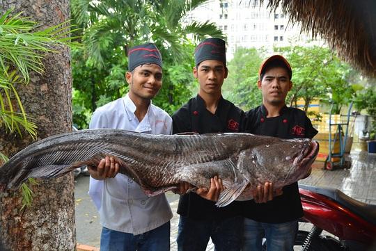 Cá leo nặng 60 kg dài 1,6 m.