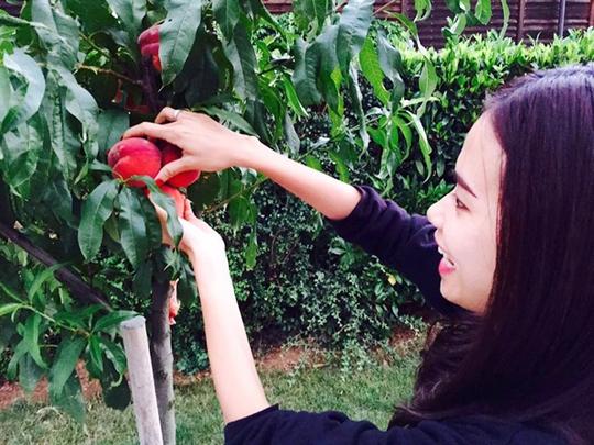 Vườn nông sản sạch của Việt kiều Pháp
