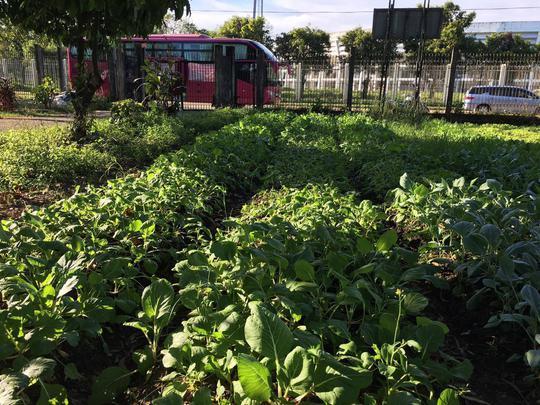 Tuyển Việt Nam mua rau cải thiện bữa ăn