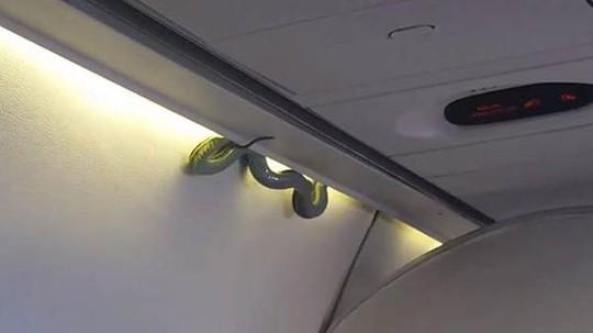 Rắn lục xuất hiện trên máy bay của hãng Aeromexico ngày 6-11. Ảnh: Indalecio Medina