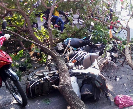 3 xe máy bị nhánh cây đè trúng ngã la liệt trên mặt đường