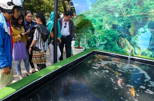 Một bể chứa loài cá Koi có nguồn gốc từ Nhật Bản được khá nhiều người quan tâm
