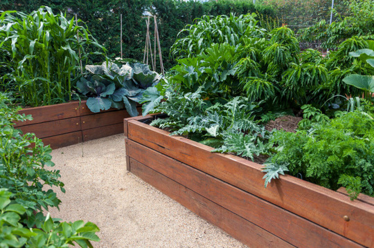Khung gỗ trồng rau, vừa rẻ vừa đẹp