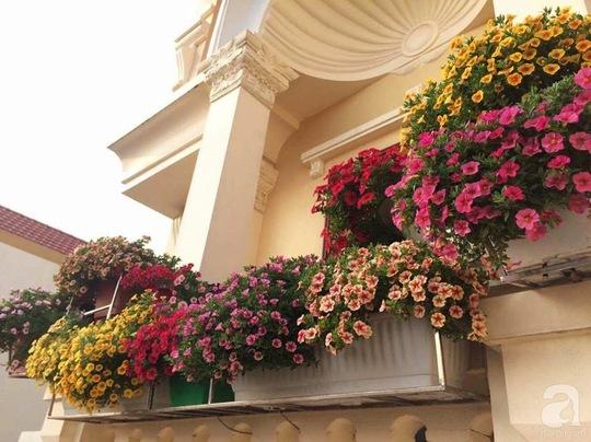 Khoảng không gian ngoại thất ngập tràn hoa triệu chuông.