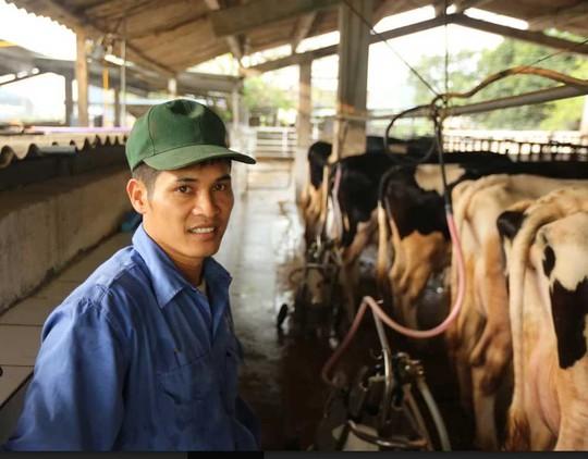 Nhờ bò sữa mà các hộ dân nơi đây đổi đời, trở thành tỷ phú với thu nhập trung bình mỗi hộ 35-40 triệu đồng/tháng