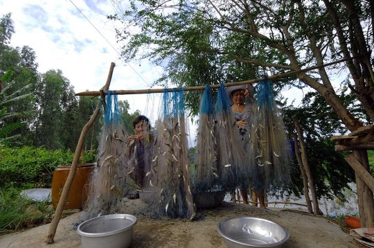 Mùa nước nổi cũng là mùa cá ở biển Hồ đổ về, nông dân bắt đầu trở thành… ngư dân