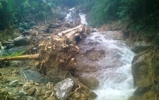 Đất đá và cây rừng bật gốc còn sọt lại khi nước lũ tràn qua