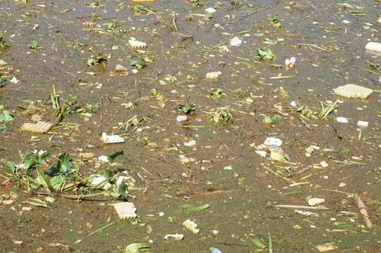 Đủ các loại rác thải bủa vây tại cống thoát nước chảy qua đường Trần Quốc Toản.