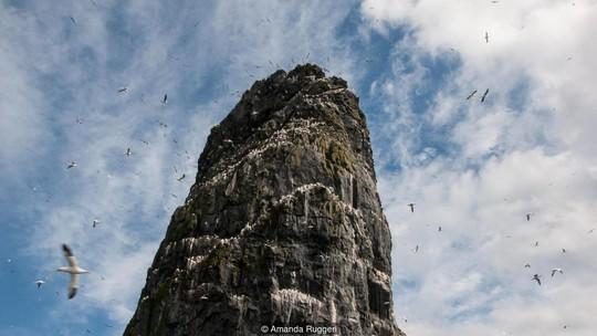 Vách đá cao sừng sững ở St Kilda. Ảnh: BBC