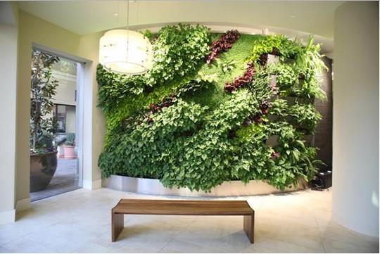 Mỗi ngày ngôi nhà bạn sẽ có những luồng sinh khí mới do năng lượng sống từ bức tường cây mang lại