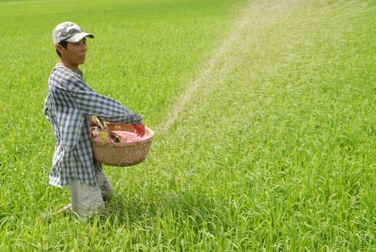 Nông dân chi nhiều tiền cho phân bón nhưng cũng hoang mang trước thông tin về chất lượng Ảnh: NGỌC TRINH