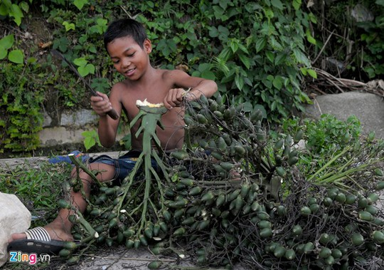 Trẻ em hái cau bán lẻ bên vệ đường Tỉnh lộ 623.