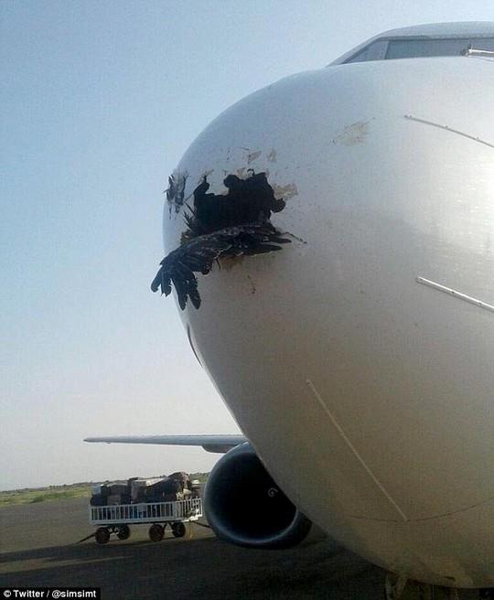 Hình ảnh con chim ưng đâm thủng mũi máy bay. Ảnh: Twitter