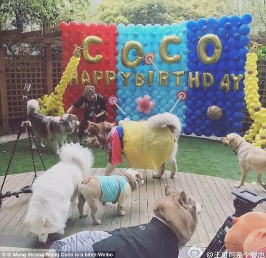 Sinh nhật 2 tuổi hoành tráng của chú chó. Ảnh: Weibo