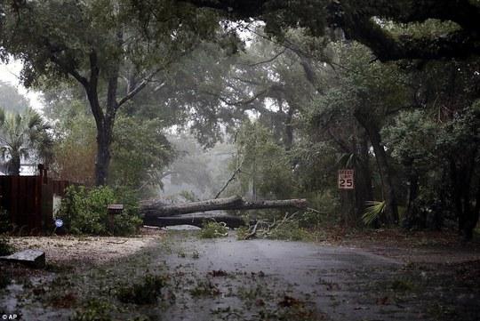Đường phố đầy mảnh vỡ, cây đổ tại đảo St. Simons, bang Georgia. Ảnh: AP
