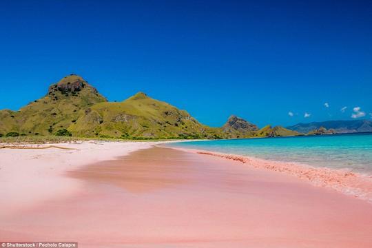 Bãi biển hồng trên đảo Padar - Indonesia. Ảnh: Shutterstock