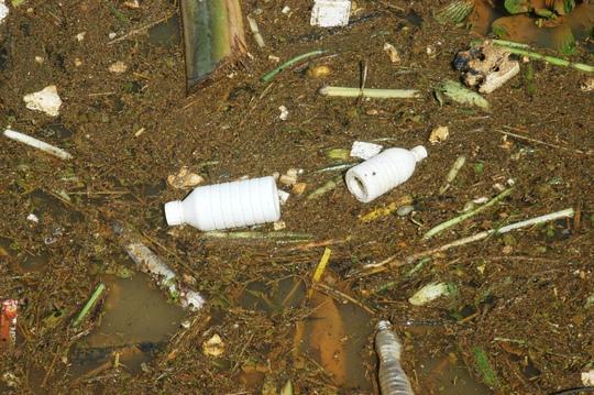 Vỏ thuốc bảo vệ thực vật khắp nơi.